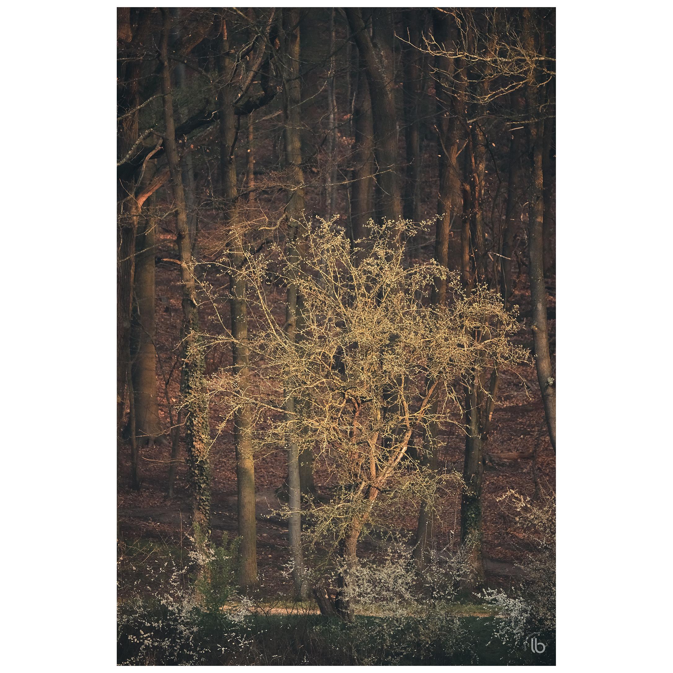 Quand la nature et l'homme savent y faire... - 20190328 - by laurence bichon photographe meudon