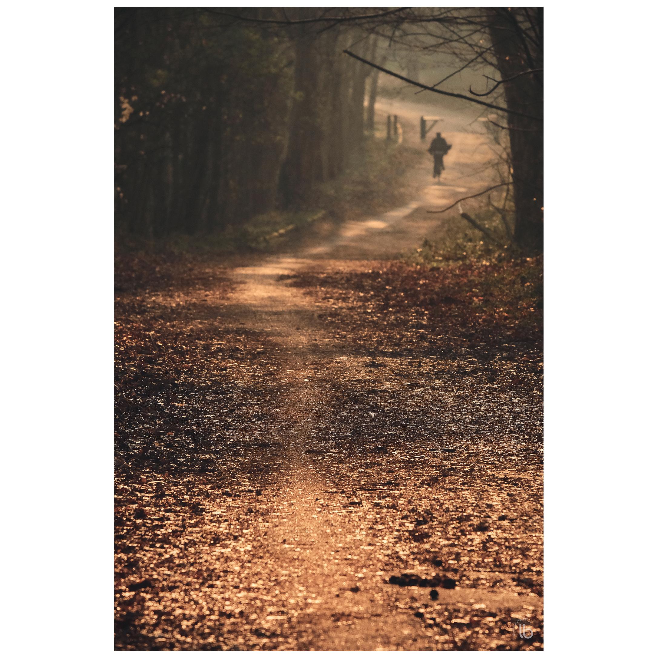 Forêt de Meudon - 20190328 - by laurence bichon photographe meudon