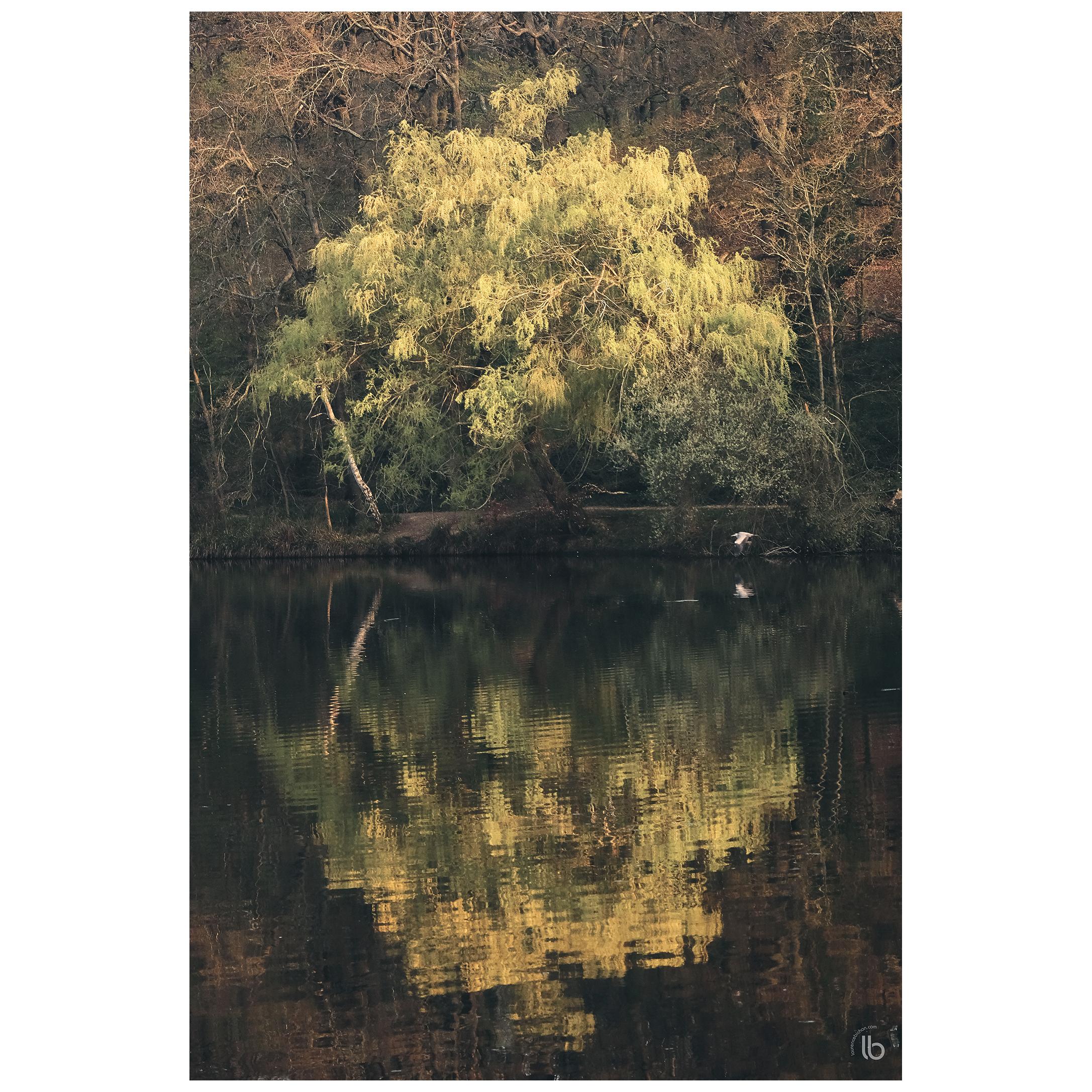 Lumière sur l'étang... - 20190328 - by laurence bichon photographe meudon