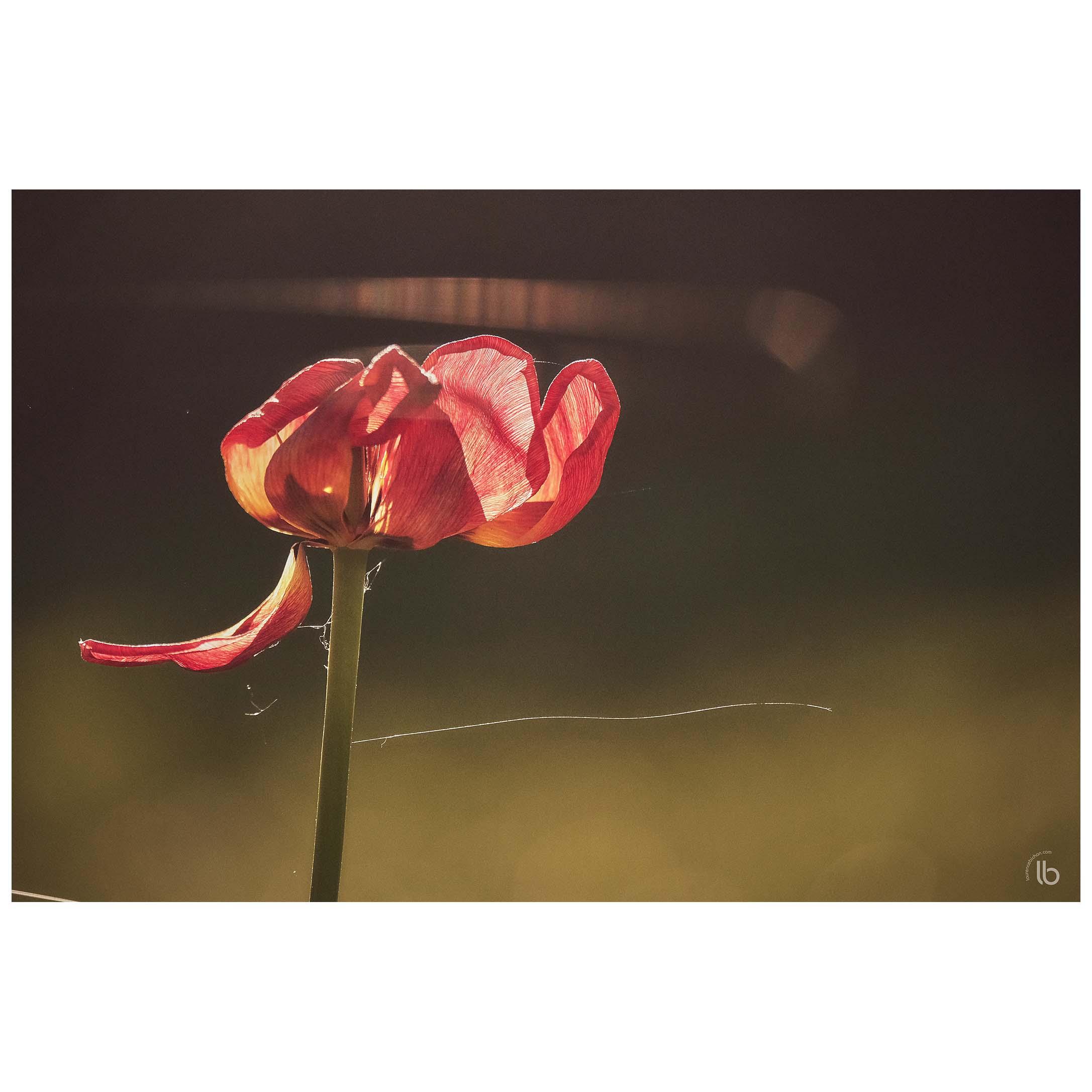 La beauté ne tient qu'à un fil - Parc Paumier - 20190420 - by laurence bichon photographe meudon