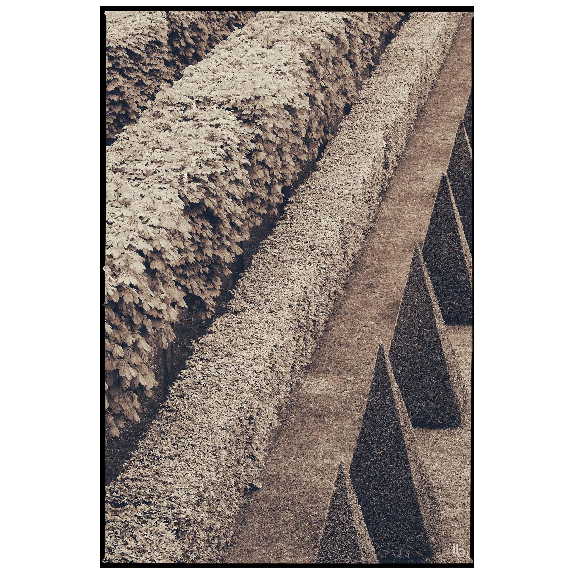 Alignements des jardins à la française - 20190425 - by laurence bichon photographe meudon